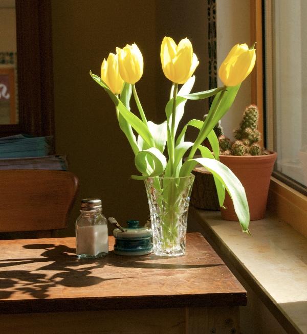 tulpen WILD2